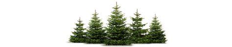 weihnachtsbaum verkauf home page www nyffenegg ch