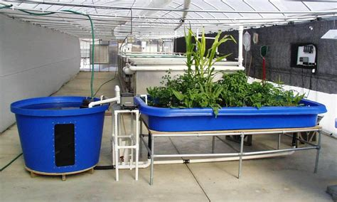 backyard aquaponics plans backyard aquaponics plans backyard aquaponics installing walsall home and garden design