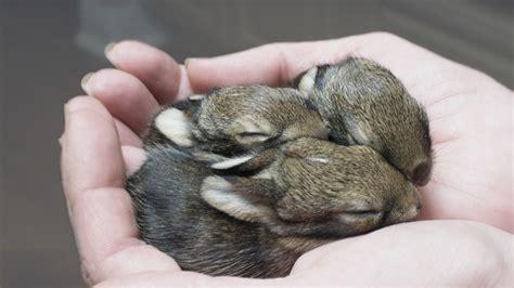 16 bunnies