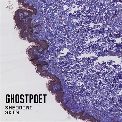 Shedding Skin shedding skin by ghostpoet album review the line of