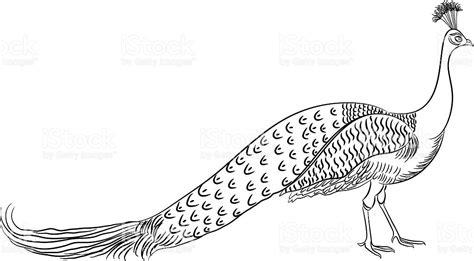 peacock drawing stock vector art 163978909 istock