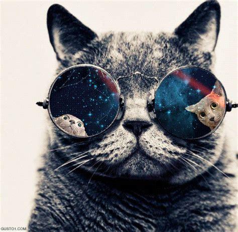 Cermin No B097 Cat Pink no puedo odiarte porque est 225 s loco flickr photo