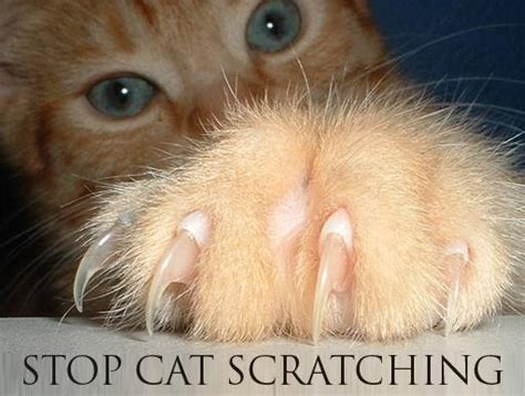 How To Get Cats To Stop Scratching Furniture by How To Stop A Cat From Scratching Furniture Animals