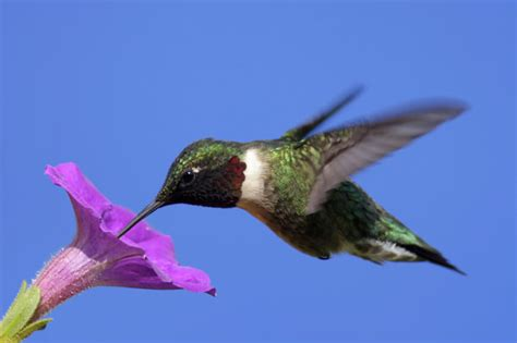 what does google hummingbird mean for marketers