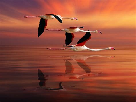 Flamingo Sunset the gallery for gt scarlet macaw wings