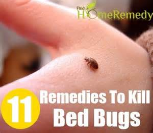 11 home remedies to kill bed bugs health home remedies