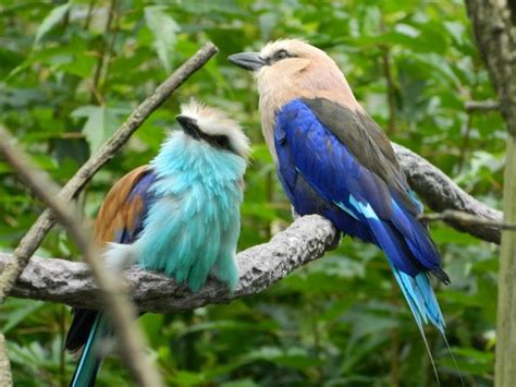 birds picture of columbus zoo powell tripadvisor