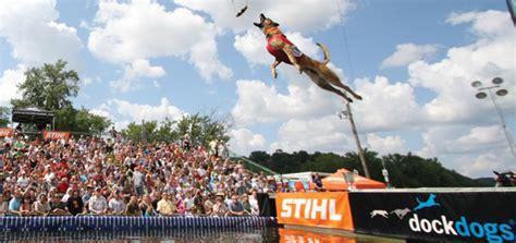 dock dogs splash high jumpin dock dogs modern magazine