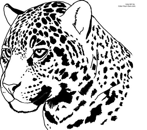 Jaguar Coloring Pages jaguar headstudy coloring page