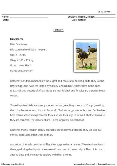 Or Questions 18 Text This Ks2 Reading Comprehension Includes A Passage With Some Interesting Facts About The Ostrich