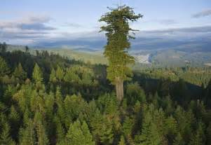 Hyperion is a redwood in northern california that is measured to be