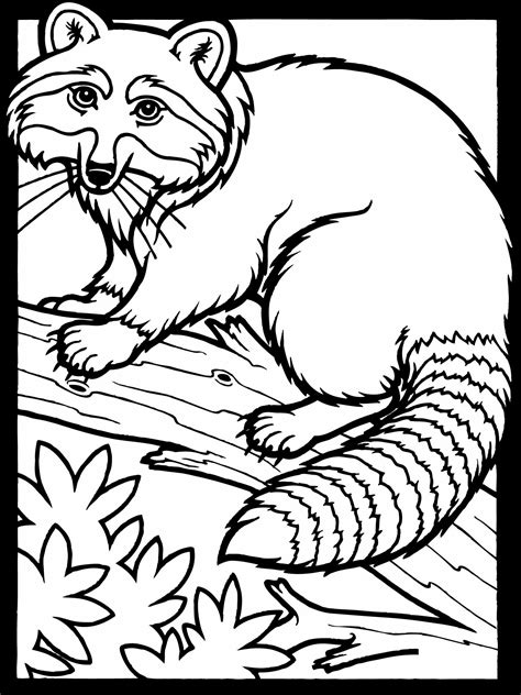 Free Color Pages free printable raccoon coloring pages for