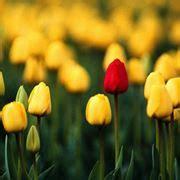 significato dei fiori gialli significato fiori gialli