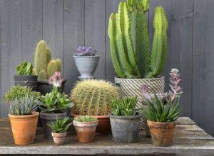 aneka tanaman hias outdoor  tahan panas bibit