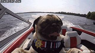 dog and boat puns 10 dog puns that will make you smile slightly more than