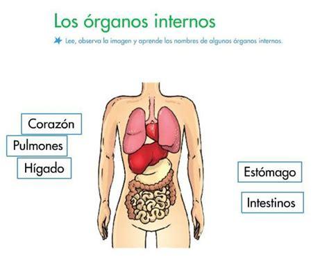 imagenes reales de organos del cuerpo humano pinterest the world s catalog of ideas