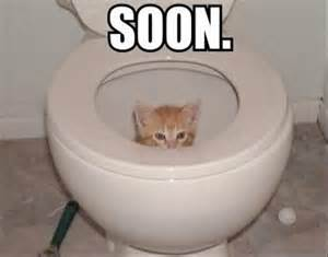 Soon Cat Meme - humor show me who you really are