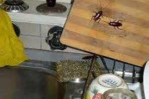 como eliminar cucarachas de la cocina c 243 mo deshacerse de las cucarachas en casa para siempre