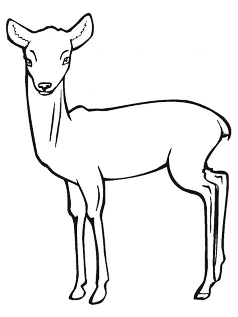 realistic goat coloring pages antelope coloring pages realistic realistic coloring pages