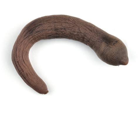 penes gruesos dentro de las vajinas reporte confidencial ins 211 lito as 237 es el quot pez pene