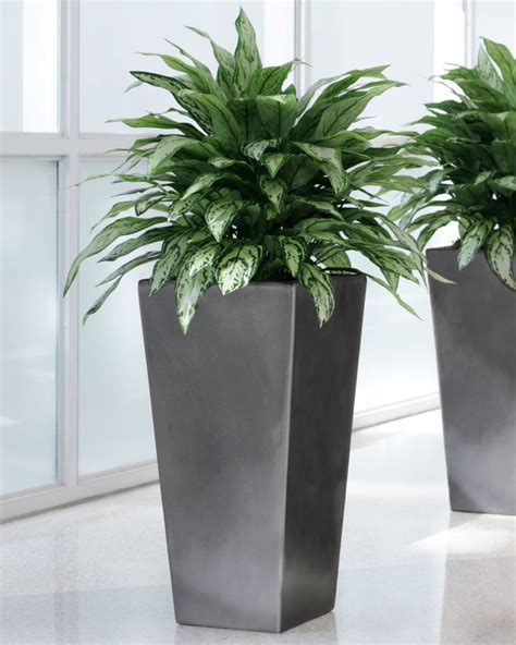 decorative trees for the home decorative plant containers silkflowers plant and tree containers to enhance any interior