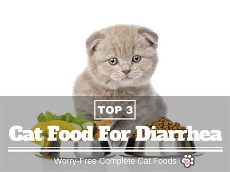 best food for diarrhea best cat food for diarrhea 3 worry free complete cat foods tinpaw