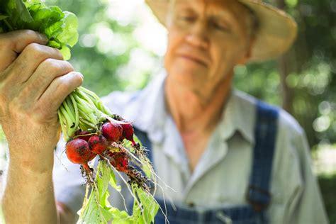 growing radishes   home vegetable garden