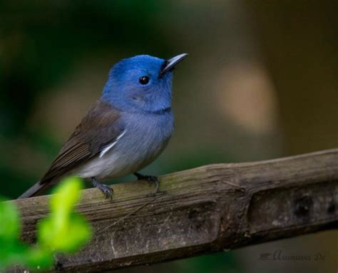 national geographic backyard birds top 25 backyard birds national geographic blog