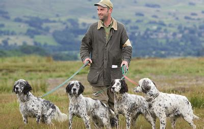 english setter working dog save our english setters country life