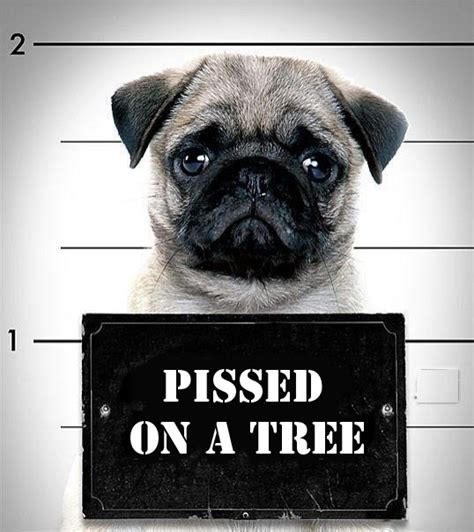 pug jokes pictures pug prison pictures pictures best jokes