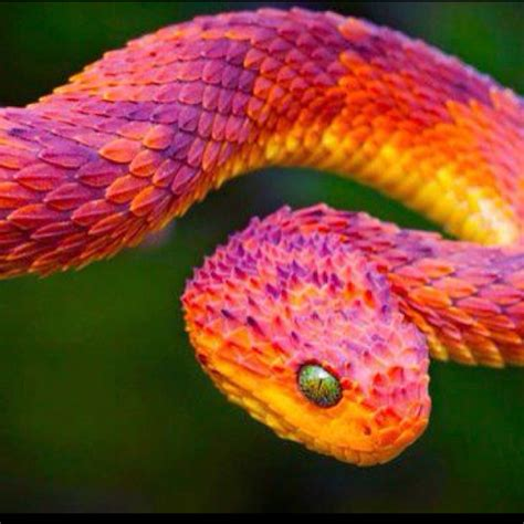 snake colors colorful snake animals
