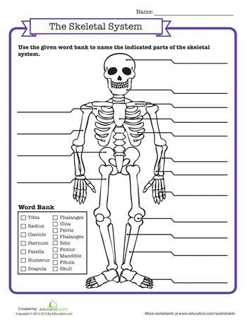 Skeletal Tissue Worksheet by Best 25 Muscular System For Ideas On