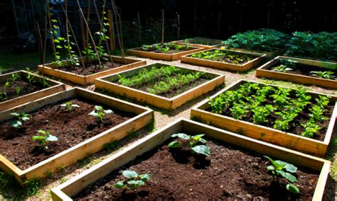 vegetable garden growing and gardening in silty soil growth as nature