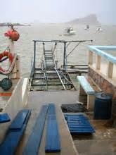 Wide Open Tuna Fishing Continues For San Jose Del Cabo