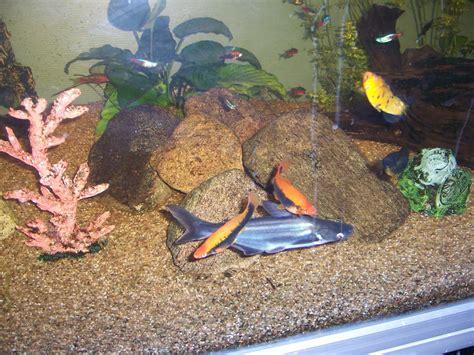 Batik Ish Tank fish big fish and wall 28 images mounted fish big