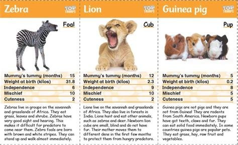 printable animal top trump cards top trumps baby animals onestopenglish