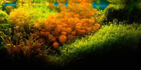 Aquascape Style by Understanding Aquascaping Style The Aquarium Guide