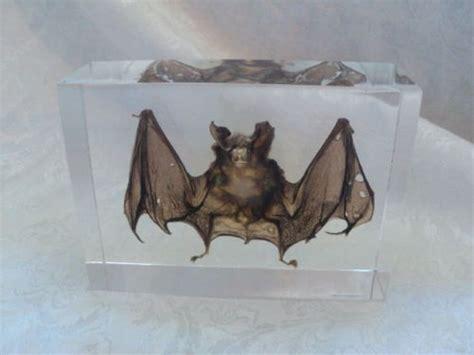Horror Home Decor Taxidermy Bat Real Preserved Bat Taxidermy Specimen Blood Animal