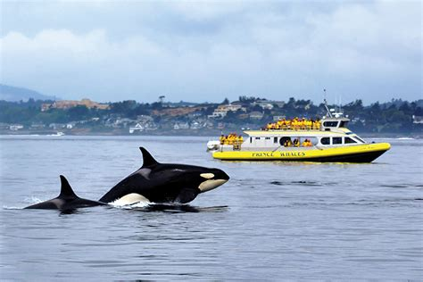 boat cruise victoria bc butchart gardens tour with whale watching package victoria