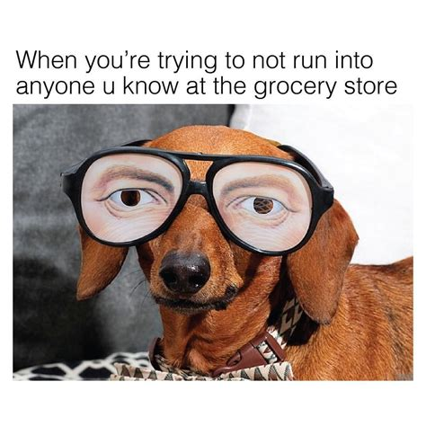 Funny Dachshund Memes - undercover grocery shopping mission solved dachshund memes