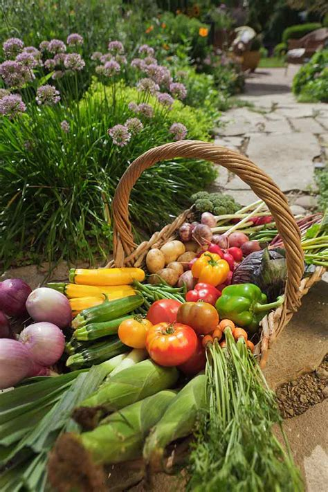 The Well Fed Garden Feeding Vegetables How Much Fertilizer To Use In Vegetable Garden