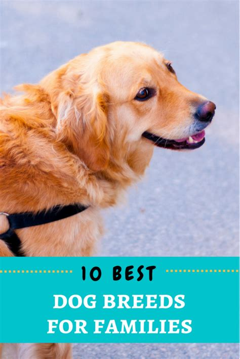 best for families the 10 best breeds for families the pet doctor supply co