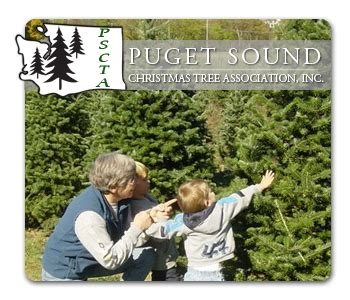 top tree farms in seattle area puget sound tree association pscta washington and seattle area choose and cut tree