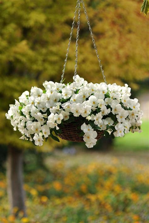 outdoor hanging planter ideas  designs