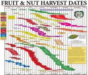 selling backyard orchard culture dave wilson nursery