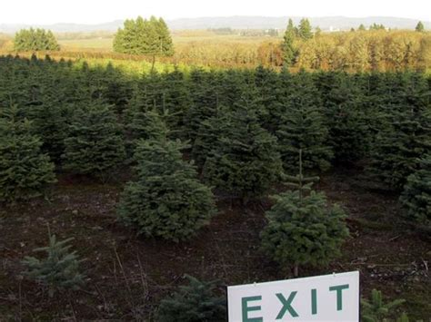 you cut christmas tree farms where to get you cut trees in salem area