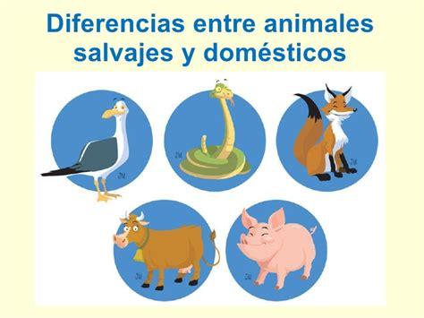 diferencia entre imagenes informativas y expresivas diferencia entre animales dom 233 sticos y salvajes