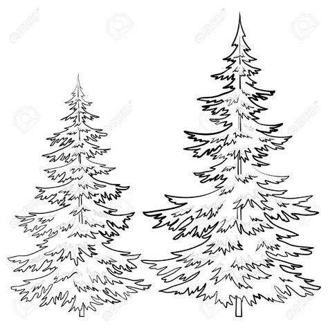 coloring page of evergreen tree evergreen tree outline free coloring pages on art