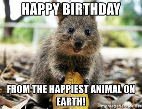 Animal Meme Generator - happy birthday from the happiest animal on earth happy