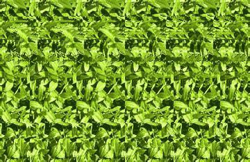 imagenes ocultas en 3d muy bueno taringa imagenes ocultas en 3d muy bueno im 225 genes taringa